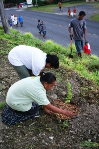 Participants planting trees outside of Pohnpei State Building.  On the road, other participants walking and picking up rubbish.